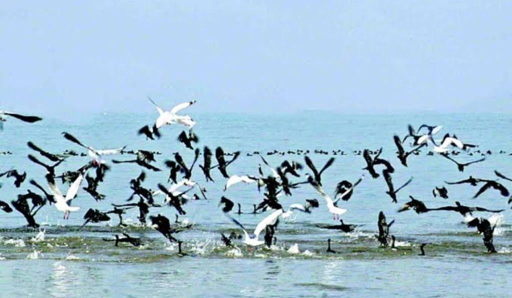 पोंग झील में पहली बार वन्य प्राणी अभयारण्य में मनाया गया पक्षी महोत्सव, 114 प्रजातियों के 1,15,701 पक्षी पहुंचे