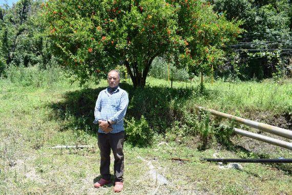 सौर सिंचाई योजना से रणजीत के खेतों में बरसी हरियाली, फव्वारों से तर हो रहे हैं खेत