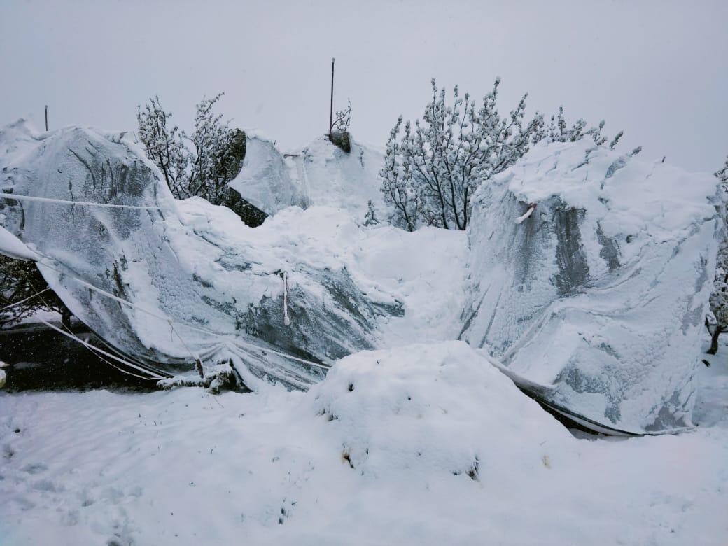 बैमौसमी बर्फ़बारी को प्राकृतिक त्रासदी घोषित कर बाग़वानों की मदद को आगे आए सरकार- कांग्रेस