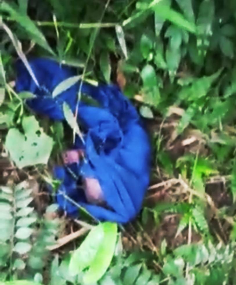 बिलासपुर में मानवता शर्मसार- नवजात शिशु को जन्म के बाद झाड़ियों में छोड़ मॉ फरार-तलाश जारी
